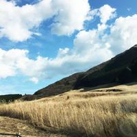 仙石原湿原植物群落の写真・動画_image_209720