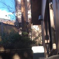 箱根湯寮の写真・動画_image_213543