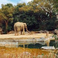 天王寺動物園の写真・動画_image_222938