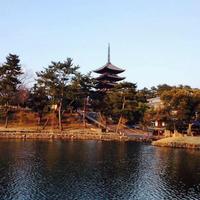 猿沢池の写真・動画_image_225005