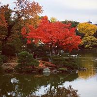 清澄庭園の写真・動画_image_248075