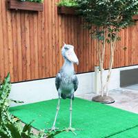 掛川花鳥園の写真・動画_image_253840