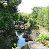 竹林園の写真・動画_image_272126