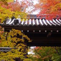 光明寺の写真・動画_image_281788