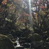 マゼノ渓谷の写真・動画_image_283448