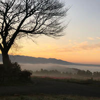 雲海の写真・動画_image_290954
