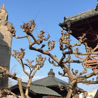 清林寺の写真・動画_image_294659