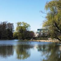 石神井公園の写真・動画_image_306479