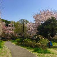 石神井公園の写真・動画_image_308564