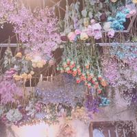 フラワースタイル・ラズリの写真・動画_image_312210