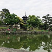 猿沢池の写真・動画_image_315634