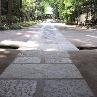 寿福寺の写真・動画_image_322804