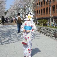 段葛の写真・動画_image_322841