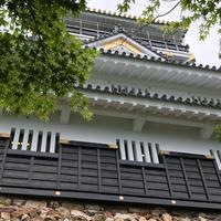 岐阜城の写真・動画_image_324293