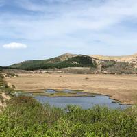 八島ヶ原湿原の写真・動画_image_328851