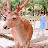 東大寺 南大門の写真・動画_image_346547