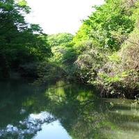 瀬上市民の森の写真・動画_image_419709