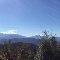 高尾山の写真・動画_image_460070