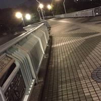 新左近川親水公園の写真・動画_image_464441