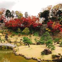 玉泉院丸庭園の写真・動画_image_465576