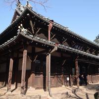 豪徳寺の写真・動画_image_515803