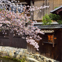 祇園白川の写真・動画_image_516069