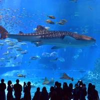 沖縄美ら海水族館の写真・動画_image_521388