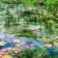 モネの池の写真・動画_image_522283