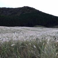 仙石原すすき草原の写真・動画_image_542007