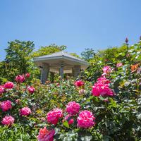 強羅花壇の写真・動画_image_583283