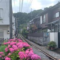 長谷駅の写真・動画_image_598510