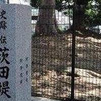 茨田堤の写真・動画_image_609941