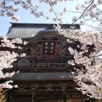建長寺の写真・動画_image_658021