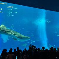 沖縄美ら海水族館の写真・動画_image_658567