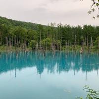 青い池の写真・動画_image_679763