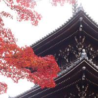 真如堂(真正極楽寺)の写真・動画_image_690158