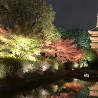 東寺 五重塔の写真・動画_image_691281