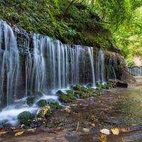 白糸の滝の写真・動画_image_716084