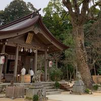 竈門神社の写真・動画_image_720034