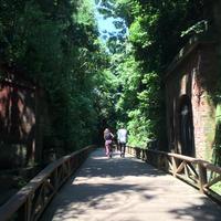 猿島の写真・動画_image_751543