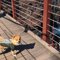 城ヶ崎海岸の写真・動画_image_758518