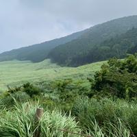 仙石原湿原植物群落の写真・動画_image_786190
