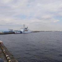 横浜港大さん橋国際客船ターミナル(大さん橋)の写真・動画_image_788736