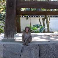 早雲寺の写真・動画_image_84399