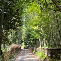 竹林の小径の写真・動画_image_918286