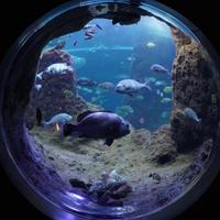 新江ノ島水族館の写真・動画_image_919085