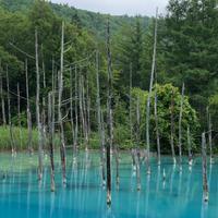 青い池の写真・動画_image_934326