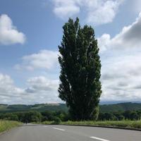 ケンとメリーの木の写真・動画_image_934630