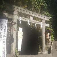 銭洗弁財天宇賀福神社の写真・動画_image_951017