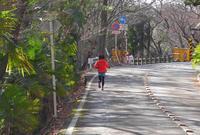 金華山ドライブコースを歩くの写真・動画_image_20912